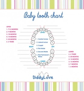 images-stories-aregak2-baby tooth chat-290x312