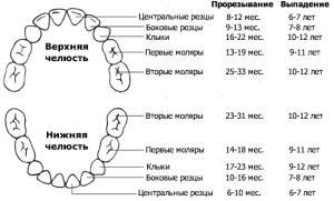 Molochnie-zubi